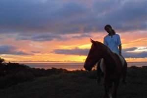 Equestrian Real Estate Financing